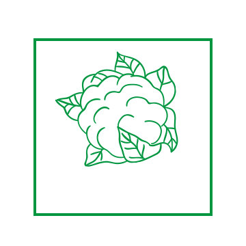 kapusta-biala