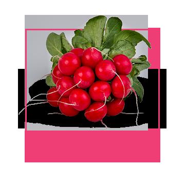 radish-bunch