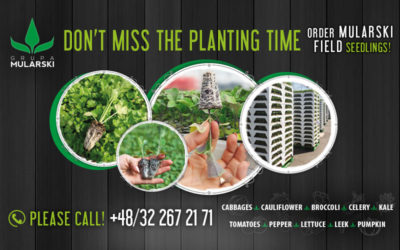 Do not miss the planting time! Order MULARSKI field seedlings!