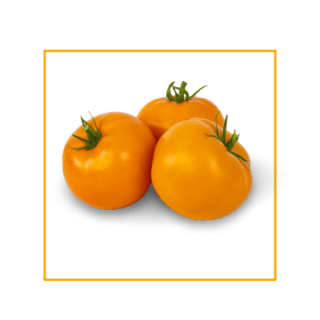 yellow-tomatoes