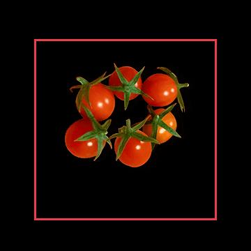 miniadors-tomatoes